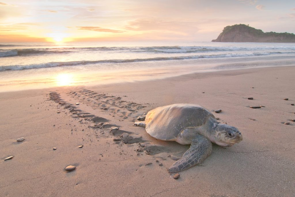 charity saving ocean turtles